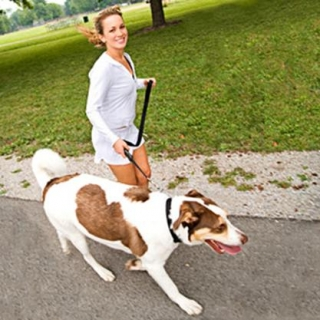 Train with your pet: the benefits are mutual!